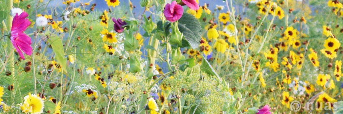 Blumenwiese - nuas® für Landschaftsbauer